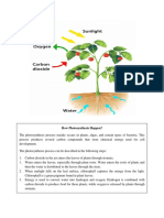 How Photosynthesis Happen