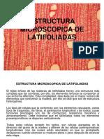 Estructura Microscopica de Latifoliadas