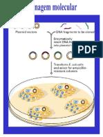 Clonagem molecular.pdf