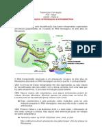 TRADUÇÃO E INTRODUÇÃO A CITOGENÉTICA (30-09)