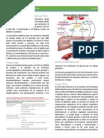 Tema 17 Cetoacidosis diabética(CAD).pdf