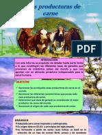 diapositivas de rasas vacunos de carne.pptx