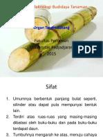 5212_organ Target Batang Edit