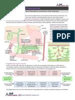1-6-regulation-of-blood-glucose.pdf