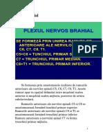 Plexul brahial 1