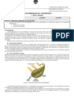 Guía N°2 - Fotosintesis - I° medio