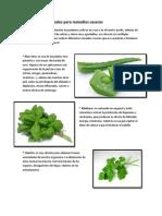 10 Plantas Medicinales Para Remedios Caseros