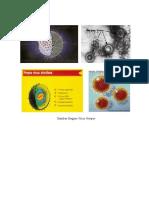 Gambar Bagian Virus Herpes