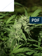 Analysis and Extraction of CBD from Cannabis via RP-HPLC-MS/DAD, Creating Synthetic Medicinal Marijuana, and Medical Applications for Epilepsy