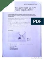 Practica Osmosis Zanahoria 1
