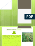 Epocas de Cultivo (3)
