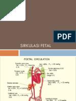 Sirkulasi Fetal