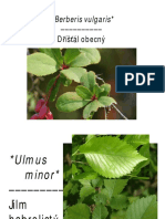 Dendrologie Listy Na Poznavacku