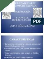 Etapas de Diferenciación o embrionaria