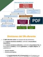 Tema5-SistemaNervioso3
