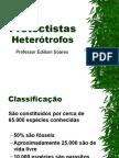 Biologia PPT - Protoctistas Heterótrofos
