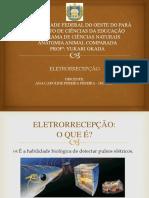UNIVERSIDADE FEDERAL DO OESTE DO PARÁ - ana.pptx
