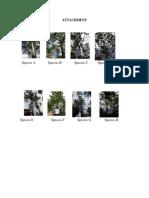 Analisis Data Pohon