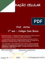 Biologia PPT - Respiração Celular