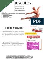 Musculos y Planos