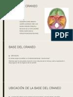 Bases Del Craneo