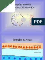 Biologia PPT - Tecidos