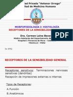 2 Receptores de La Sensibilidad General Dra Leiva (1)