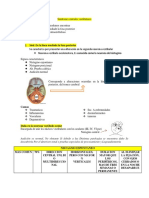 Sindrome centrales vestibulares.pdf