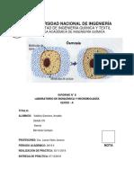 Informe 7 - Manejo y Observación en El Microscopio Óptico