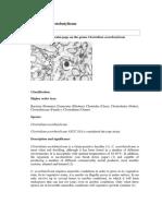 Clostridium Acetobutylicum
