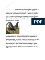 antecedentes de las peleas de gallos