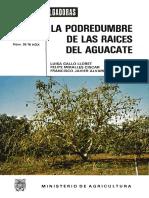 Phytoptora en Aguacate