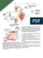 Protoctistas 2 - Doença de Chagas