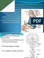 345689719 Fisiologia Endocrina