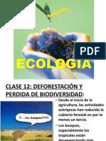 Deforestacion y perdida de biodiversidad