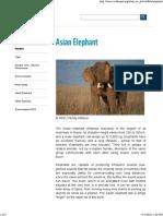 Asian Elephant - WWF