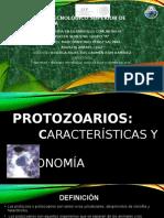 expocisión protozos