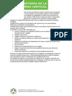 ANATOMIA_CERVICAL.pdf