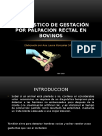Diagnostico-de-gestación-POR-PALPACION-RECTAL-EN-BOVINOS.pptx