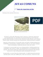 Parasitas comuns nos peixes ornamentais