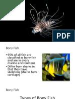 bony fish