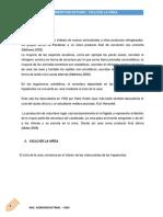 Ciclo de La Urea Bioquimica