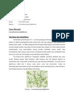1. struktur molekuler dan epidemiplogi corynebacterium diphteriae.docx