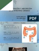 FERMENTACIÓN Y ABSORCIÓN EN EL INTESTINO GRUESO.pptx