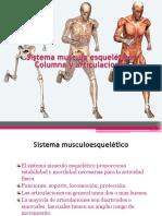 sistemamusculoesqueltico-131103090843-phpapp01