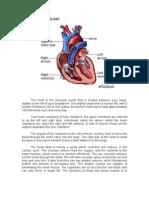 Anatomy&Physiology,Pathophysiology (Julie)