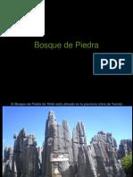 Bosque de Piedra 1.pps