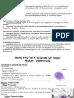 2) Protozoos II (Parásitos)