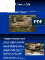 Crocodili.ppt