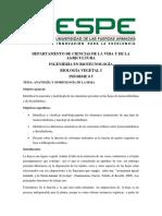 Informe de morfología y anatomia de la hoja monocotiledonea y dicotiledonea